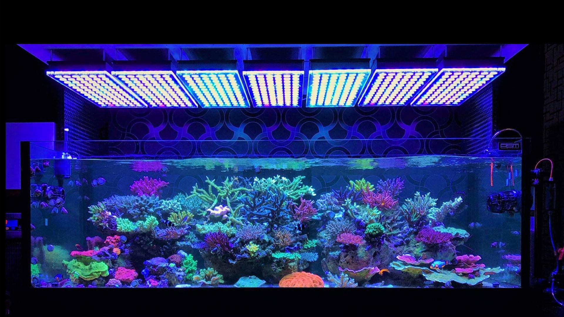 Illuminazione led in acquario