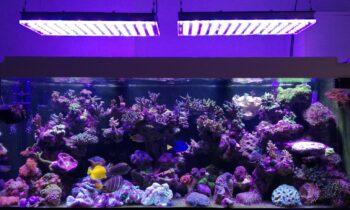 Alleviare lo stress: luci e acquari